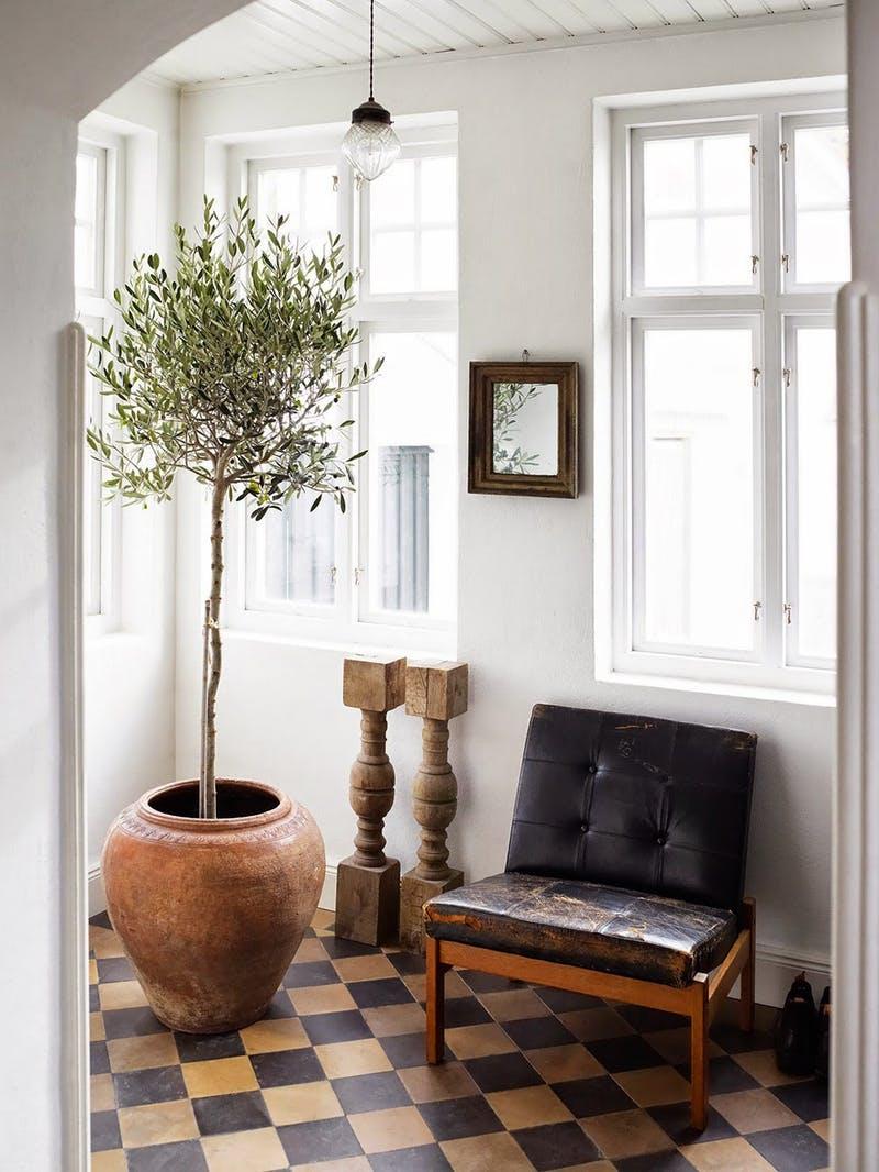 Драматичный декор: 7 больших растений, которые можно вырастить дома